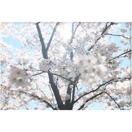 Blossoming - 24in. x 36in.