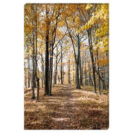 Autumn Forest Canvas Art - 24in. x 36in.