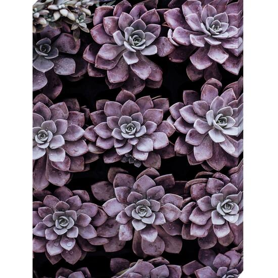 Succulent in Line Canvas Art - 18in. x 24in.