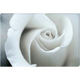 White Rose - 36in. x 24in.