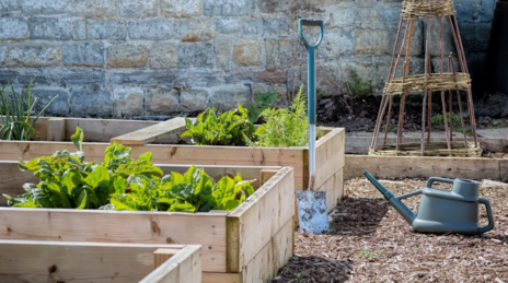 Read Article on Know How to Build Raised Garden Beds