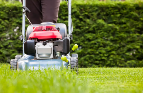 Read Article on Know How to grow the best lawn in the neighbourhood