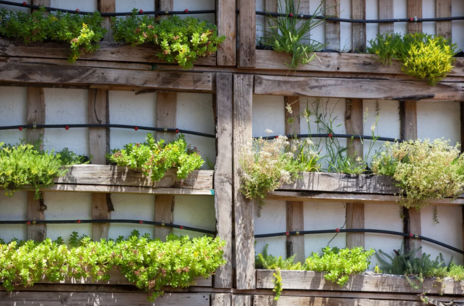 Read Article on Know How to Grow in a Pallet Garden