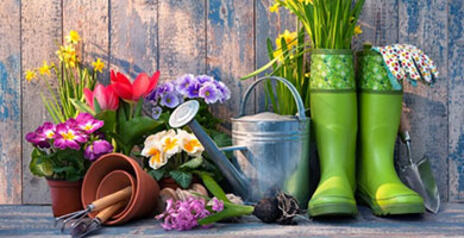 Read Article on Know How To Create Beautiful Spring Planters With Bulbs and Flowers