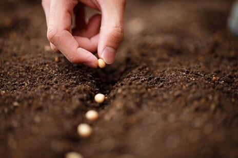 Read Article on Know How to Prepare the Ground to Plant