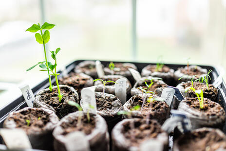 Read Article on Know How to Start Seeds Indoors