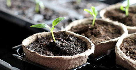 Read Article on Know How to Start Your Indoor Growing Right